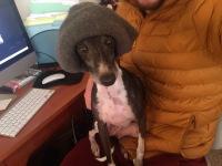 gio-hat-blog